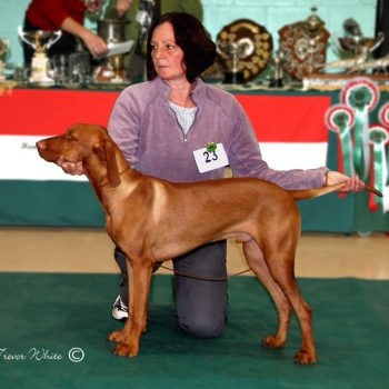 Adolphustown Acorn Best Puppy Dog